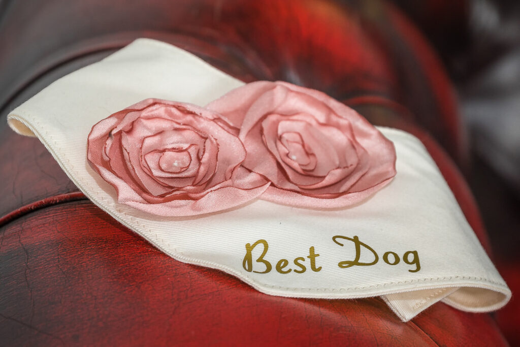 The Best Dog's collar. It consists of a white stitched material collar with 2 pink cloth roses, and with in gold letters Best Dog written on it.