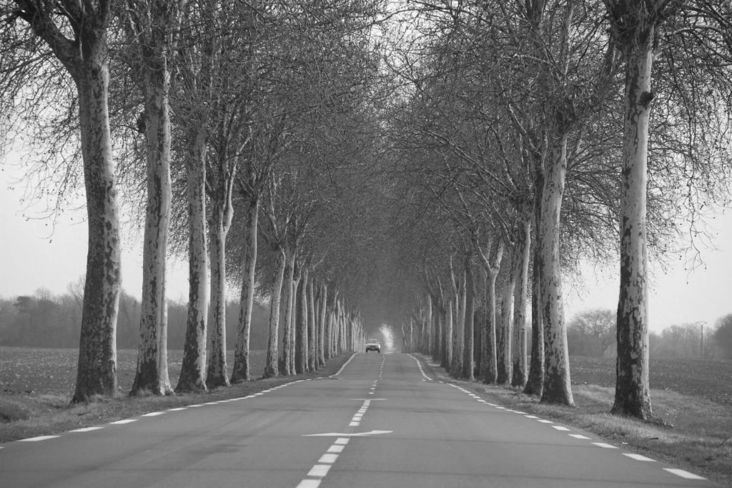A car travels along a deserted tree lined avenue in rural France