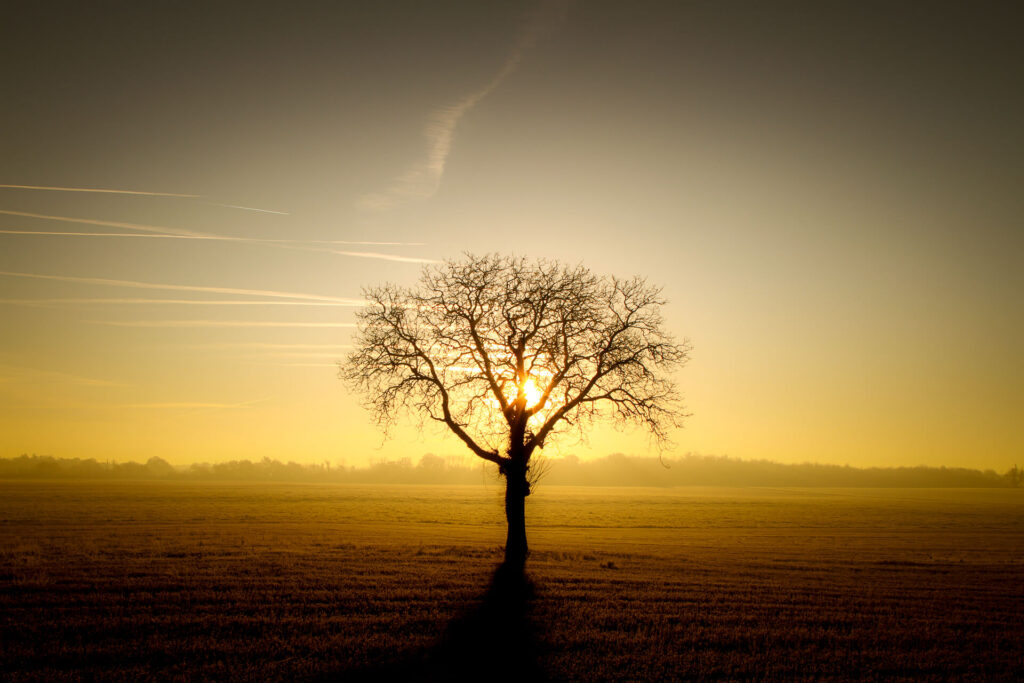 An isolated tree in a field, taken in silhouette at dawn with the sun rising behind.
