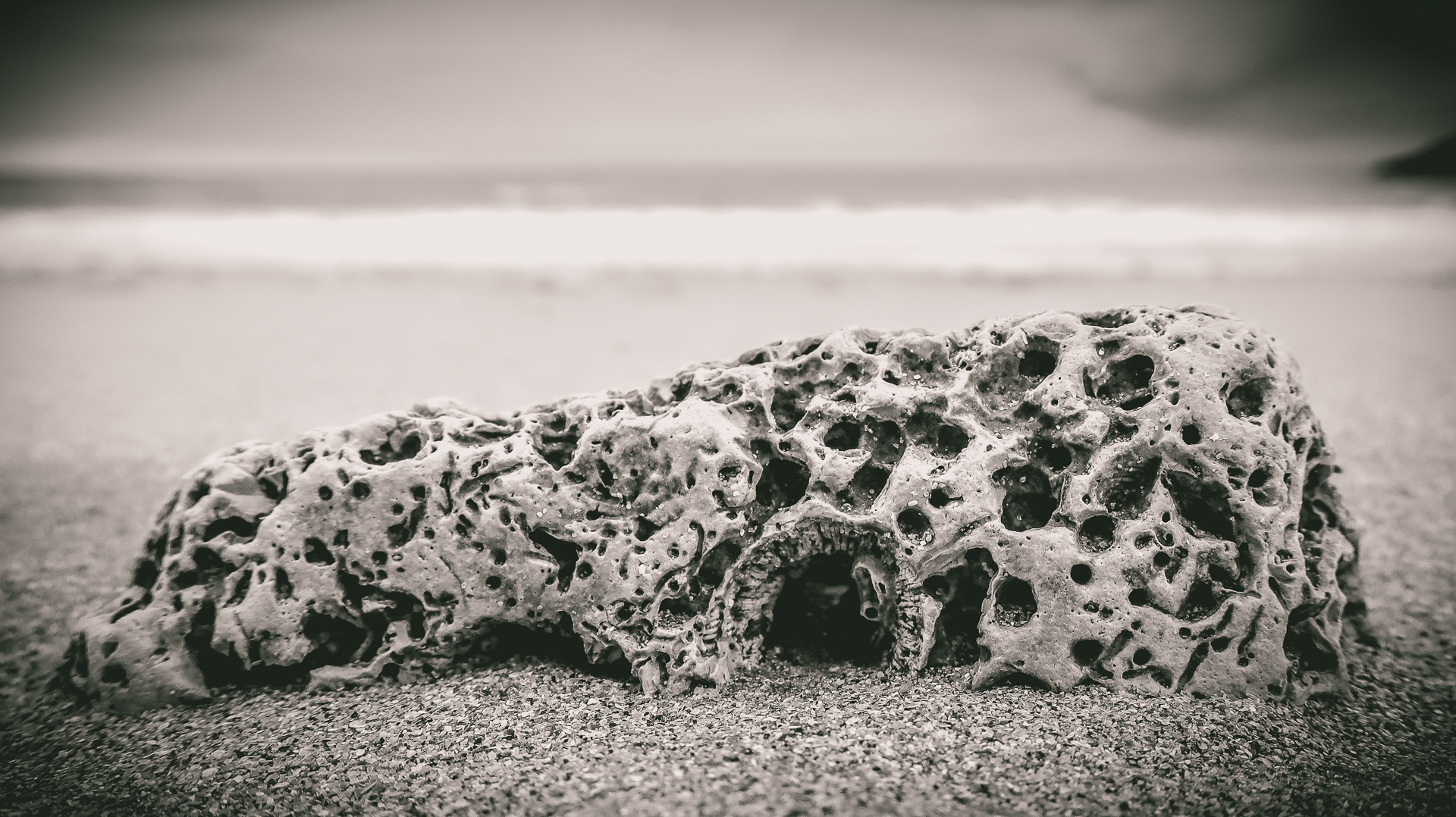 A very shallow depth of field close up black & white view of a long horizontal stone, similar to a pumice stone on a sandy beach. The light coloured stone is pitted with random holes of various diameters all over its surface.