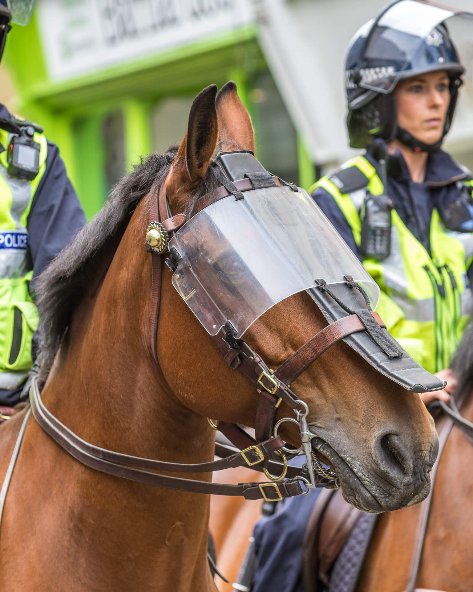 A close up image of the head of a chestnut coloured Police Horse taken during the Worcester BNP march. He wears a full vizor (which is secured to his bridle) to protect his eyes.