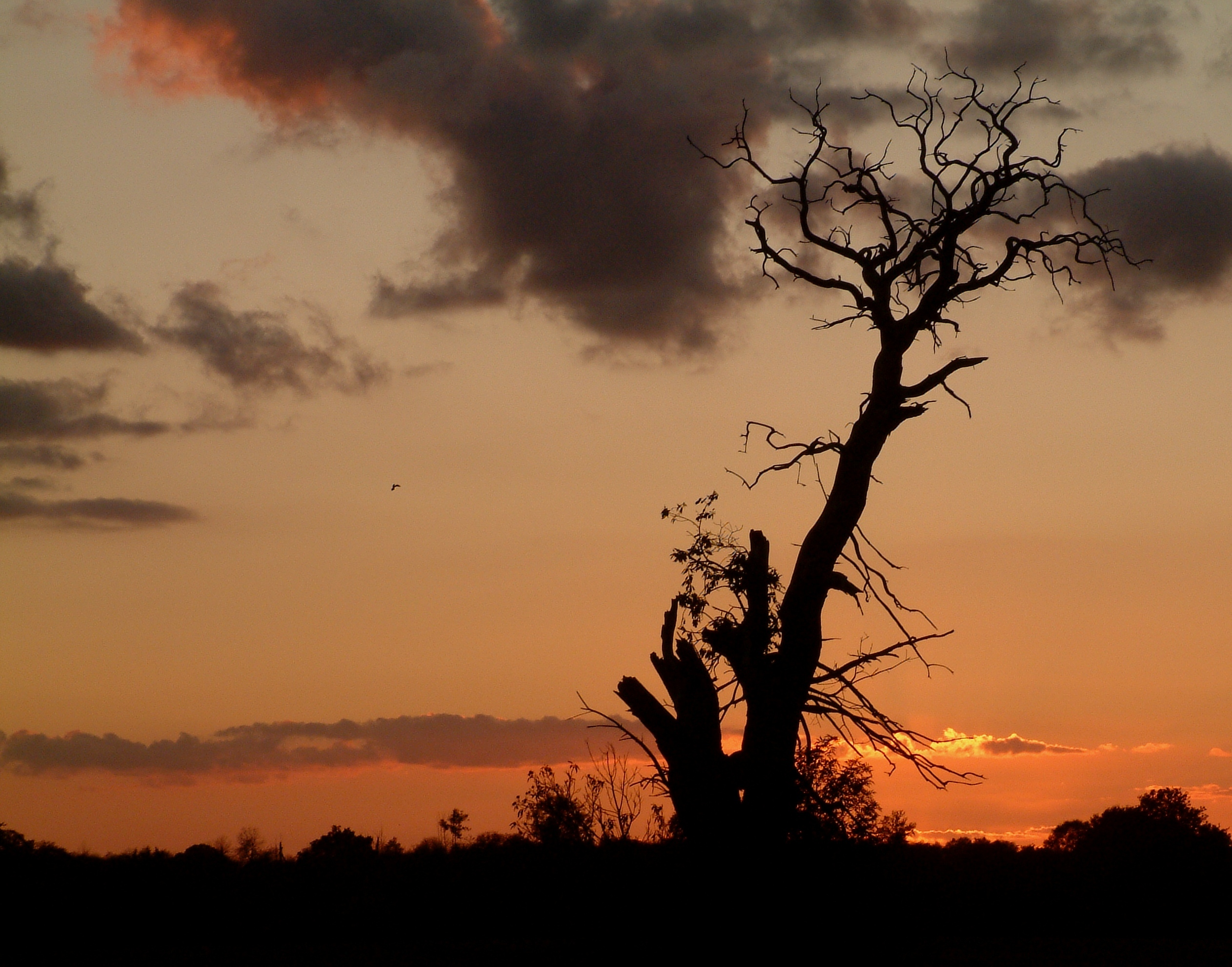 The silhouetted figure of a large and long dead tree, set against a beautiful sunset near Blanzay in France.